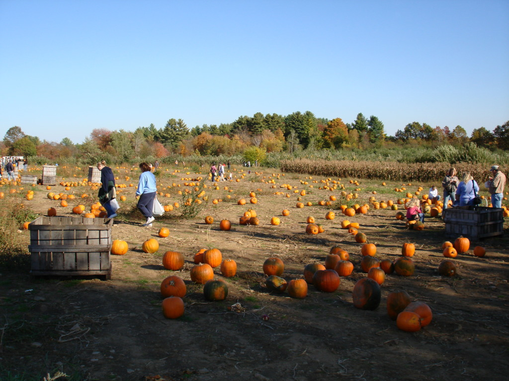 pumpkin patch, New Hampshire