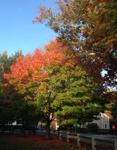 red-foliage