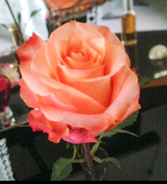 thebouqs.com, flower delivery service, Dawn coral rose