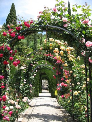 credit: http://www.tangdynastytimes.com/2009/03/roses-of-alhambra.html