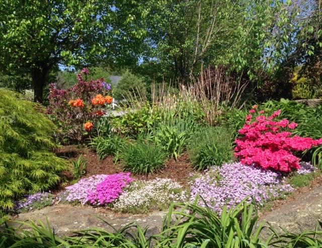 spring flowers, spring shrubs