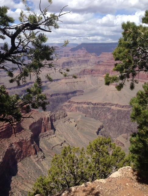 Grand Canyon tree framed view neversaydiebeauty.com
