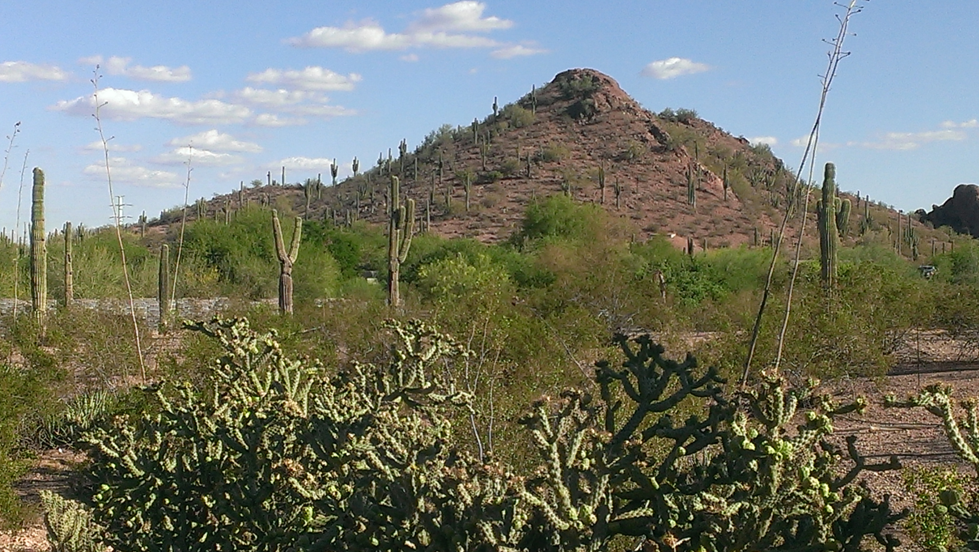 mountain near Desert Botanical Gardens Scottsdale AZ
