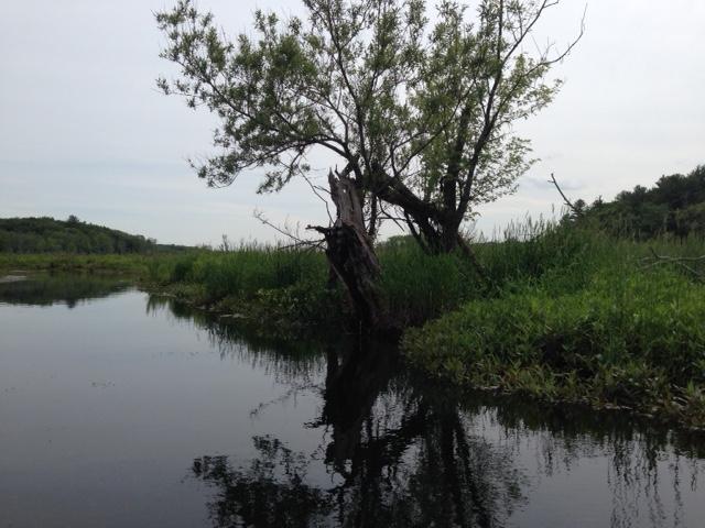 Ipswich River view @redAllison