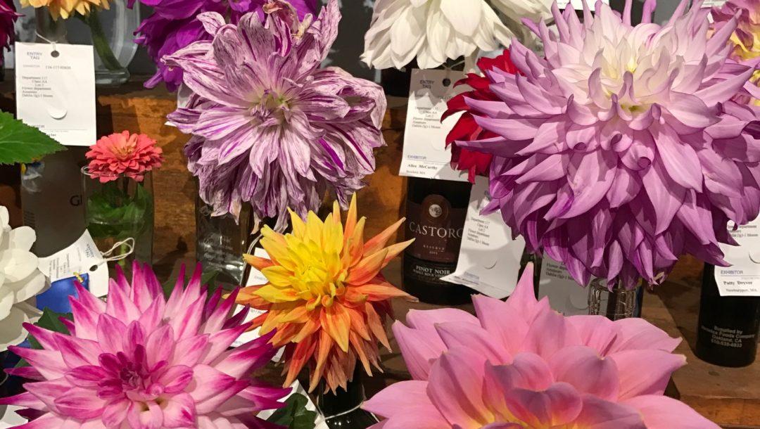 dahlias Topsfield Fair neversaydiebeauty.com