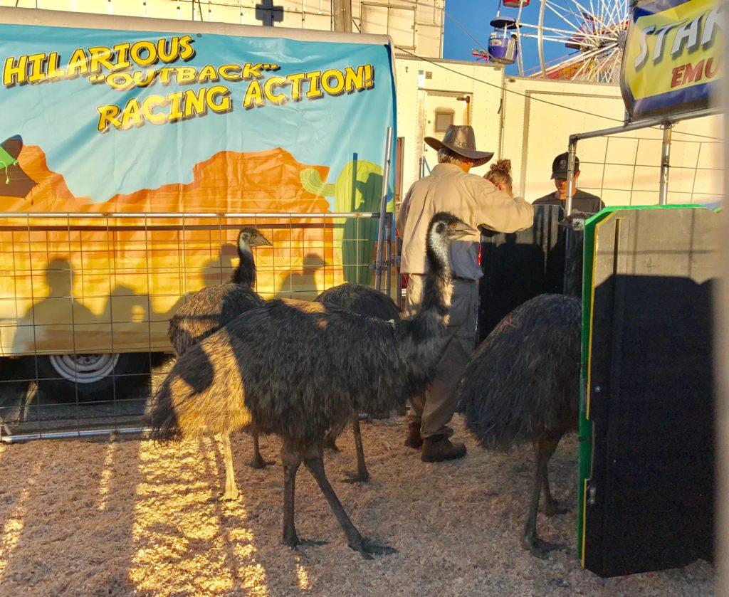 emus Topsfield Fair neversaydiebeauty.com