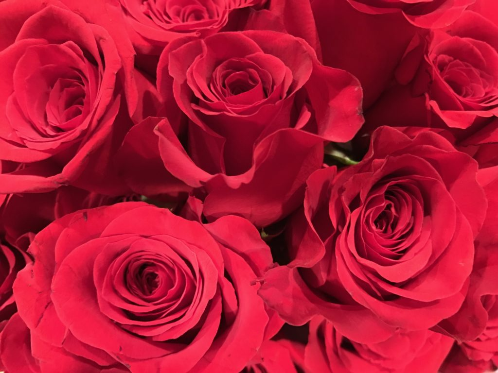 montage of red roses, neversaydiebeauty.com