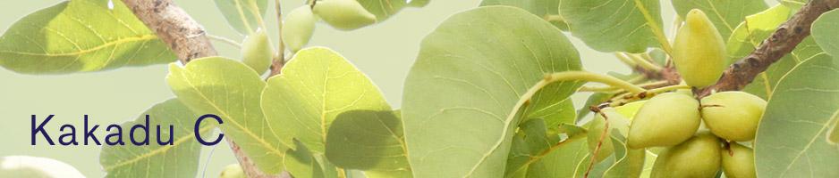 photo of Kakadu plums from Australia